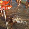 Tartaruga marina spiaggiata senza vita a Marina di Ardea