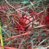 [VIDEO] Nate quattro tartarughe africane allo Zoomarine