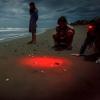 Schiude il nido di tartaruga marina a Castellaneta (TA)