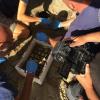 Nessuna nascita dal nido di tartaruga marina di Ardea (RM)