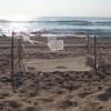 Si blocca la schiusa delle uova di tartaruga a Sciacca (AG)