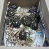 Vendeva tartarughe online senza documenti: denunciato