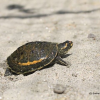 India: un nuovo centro per la salvaguardia delle tartarughe