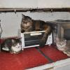 Deteneva in casa 68 animali in condizioni pietose: denunciata