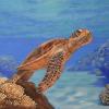 La donna che dipinge per aiutare le tartarughe e l'oceano
