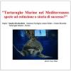 """Il """"Portici Science Cafè"""" incontra le tartarughe marine"""