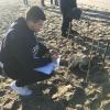 Tartaruga marina rinvenuta spiaggiata a Viareggio (LU)