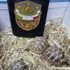 Ancora sequestri e denunce per quattro tartarughe senza CITES