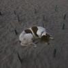 Un cane-attivista protegge i nidi delle tartarughe marine