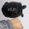 Tartaruga d'acqua dolce salvata in mare a Nervi (GE)
