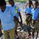 """Riciclare plastica per curare il """"mal di pancia"""" delle tartarughe"""