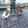 Anche un minorenne arrestato per caccia di tartarughe marine