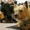 Deceduto Ridley: il cane che trovava i nidi delle tartarughe