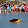 Lunedì il rilascio di due tartarughe marine nell'agrigentino