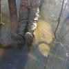 Ecco di chi è lo scatto della tartaruga sotto il ghiaccio