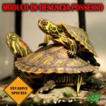 """Denuncia possesso """"Trachemys scripta"""": modulo e modalità"""