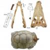 Trovati resti di coccodrillo predatore di tartarughe giganti