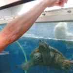 Assolto il docente che diede un cane in pasto alla sua tartaruga