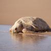Tutela delle tartarughe: ambientalisti contro il resort (AUS)