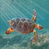 Scoperta una nuova tartaruga vissuta 70 milioni di anni fa