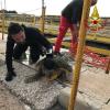 VdF salvano una tartaruga aspirata dall'impianto petrolchimico