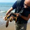 Capitan Peter torna in mare con altre quattro tartarughe