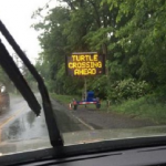 USA: Cartelli stradali per salvare le tartarughe azzannatrici