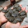 Fermato un carico di contrabbando di migliaia di tartarughe