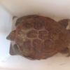 I bagnanti salvano una tartaruga marina sul litorale catanese