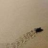 Denuncia di violazioni contro le tartarughe a Zante
