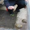 Denunciata una coppia per possesso di tartarughe senza CITES
