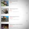 Vendita online di tartarughe senza CITES: denunciato un leccese