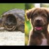 Alimentò la tartaruga con un cane: chiesti 6 mesi di galera