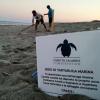 Boom di nidi di tartaruga in provincia di Reggio Calabria