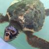 Fondazione Cetacea: due tartarughe ritornano in mare domani