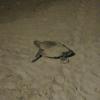 La prima nidificazione del 2018 anima una cena in riva al mare