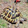 Tre tartarughe ed un pappagallo senza CITES: due denunce a Lecce