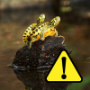 Risposte ai dubbi sul DL relativo alle tartarughe Trachemys scripta