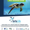 TartaWorld: scopri le tartarughe marine dell'AMP Isole Egadi