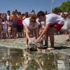 Quattro tartarughe ritrovano il mare grazie alla Fond. Cetacea