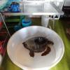"""Inaugurato il """"Turtle Point"""" del Pronto Soccorso di Filicudi (ME)"""