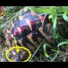 Savona: Polizia scopre tartaruga legata ad una catena