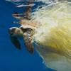 Bagnanti recuperano tartaruga gravemente ferita nel vibonese
