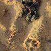 Hatchlings di tartarughe uccisi sulla spiaggia da alcuni cani