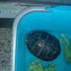 Rubate le radio ed una tartaruga ai sub di Marina di Cerveteri (RM)