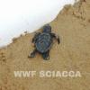 Piccola tartaruga marina soccorsa dai bagnanti a Sciacca (AG)