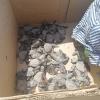 Manduria (TA): tartarughe marine appena nate investite dalle auto