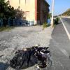 """Ancora un attacco alla sede di """"Caretta Calabria Conservation"""""""