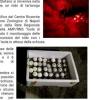 Ancora sfortunato il Lazio: uova non vitali a Ventotene (LT)