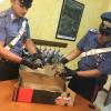 Tenta di vendere 2 tartarughe di terra senza CITES: denunciato